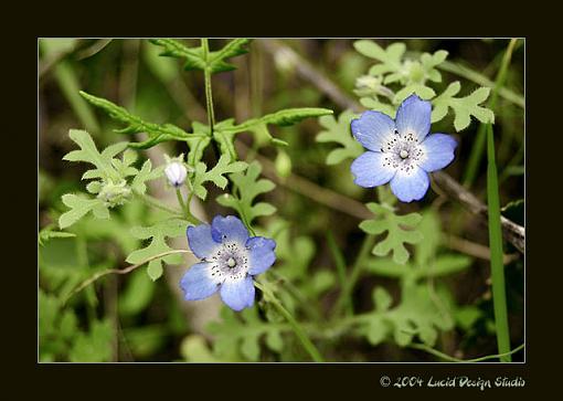 A few from today-blue_flower.jpg