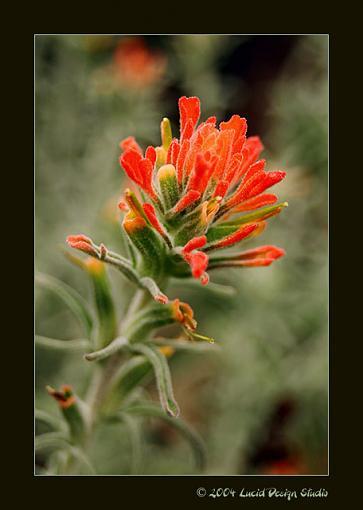 A few from today-flower.jpg