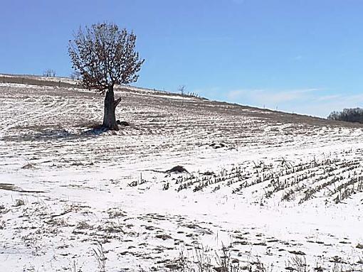 Tree Pics?-lonetree1.jpg
