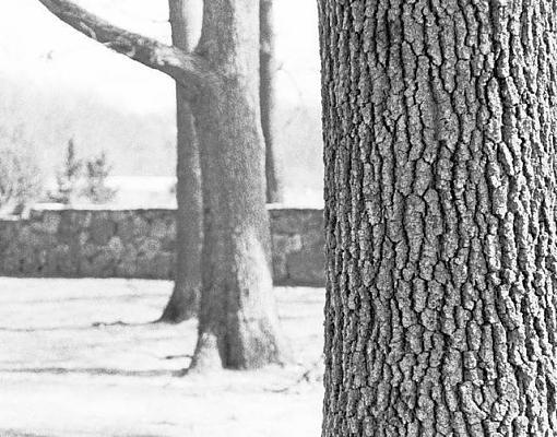 Tree Pics?-trees-depth-field.jpg