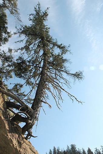 Tree Pics?-dsc_3364hanginthere_motivationalsmall.jpg