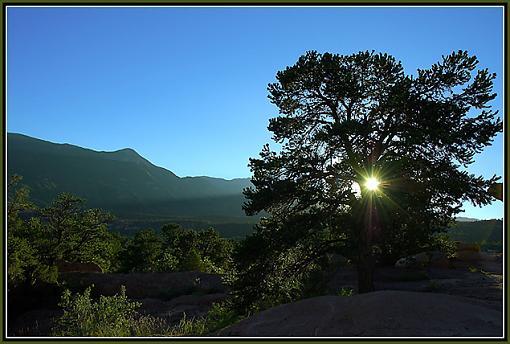 Tree Pics?-_dsc3843-sunset-tree-2-preview.jpg