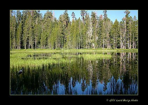 Tree Pics?-marsh.jpg