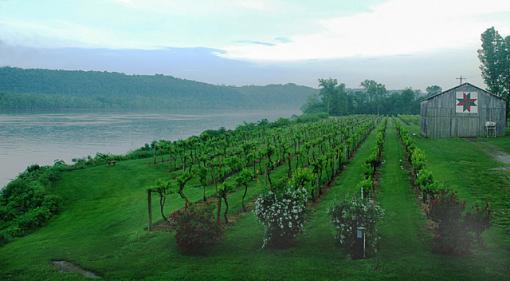 Photographyreview: The People-vineyard-river-2.jpg