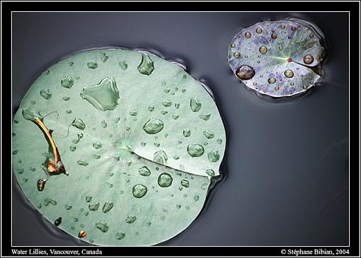 Photographyreview: The People-04-vdg-waterlillies-preview.jpg