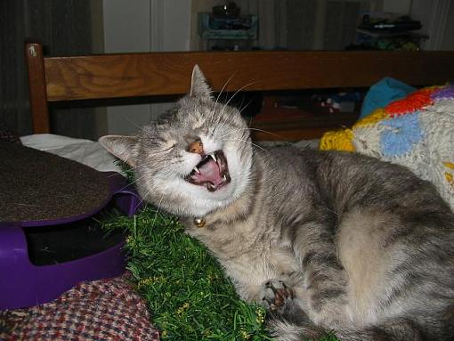 Funny Animals!!!-yawn-6-.jpg