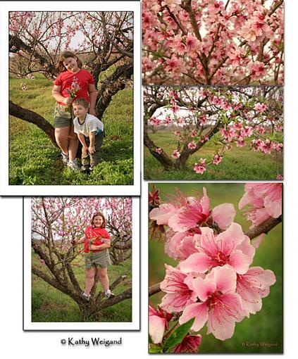 First shots w/ new Canon 17-40L-peaches.jpg