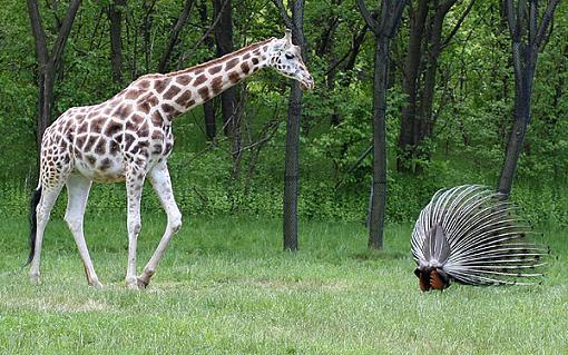 Official NYC Gathering Photos-giraffe.jpg
