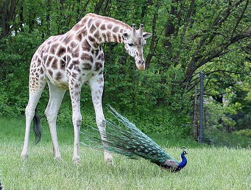 Official NYC Gathering Photos-giraffeint2.jpg