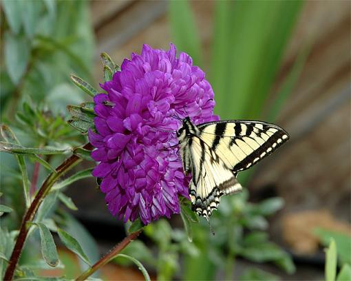 Just a butterfly-butterfly2.jpg