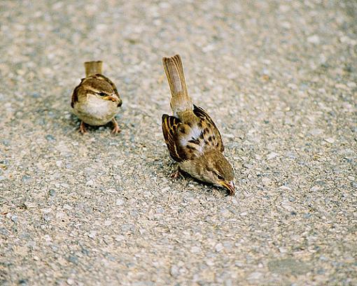Post Your Bird Images Here!!!!!!!-birds-centralpk.jpg