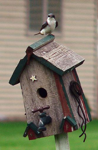 Post Your Bird Images Here!!!!!!!-08.jpg