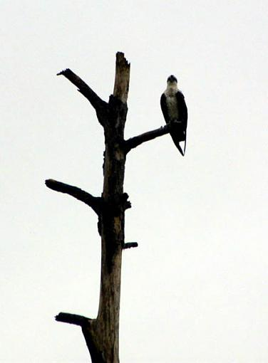 Post Your Bird Images Here!!!!!!!-263541-013.jpg