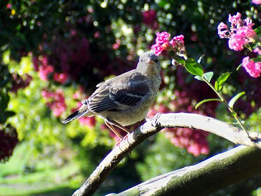 Post Your Bird Images Here!!!!!!!-100_1356.jpg