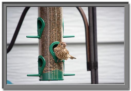 Post Your Bird Images Here!!!!!!!-bird.jpg