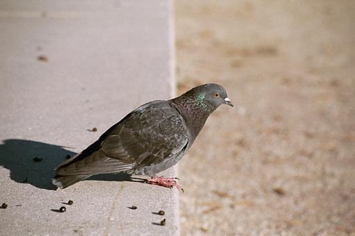 Post Your Bird Images Here!!!!!!!-charleston-285-01-pr.jpg