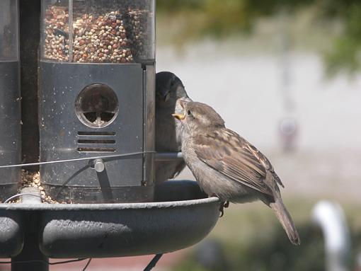Post Your Bird Images Here!!!!!!!-feeder-21-pr.jpg