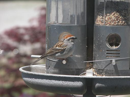 Post Your Bird Images Here!!!!!!!-feeder-22-pr.jpg
