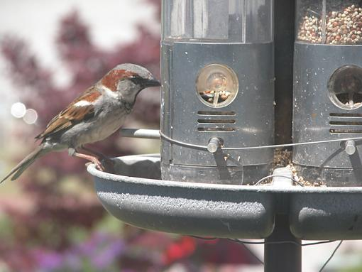 Post Your Bird Images Here!!!!!!!-feeder-23-pr.jpg