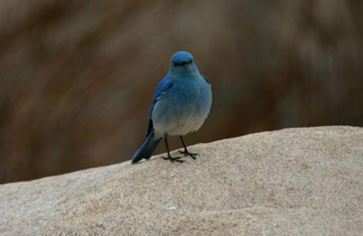 Post Your Bird Images Here!!!!!!!-bird4458.jpg