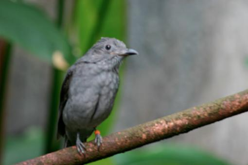 Post Your Bird Images Here!!!!!!!-img_0679.jpg