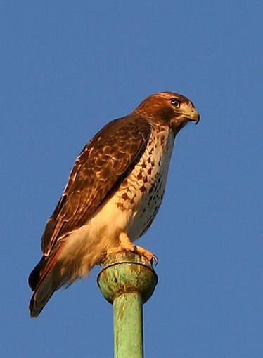 Post Your Bird Images Here!!!!!!!-bird3-2538.jpg