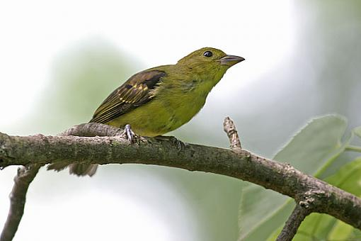 Post Your Bird Images Here!!!!!!!-yellow2.jpg