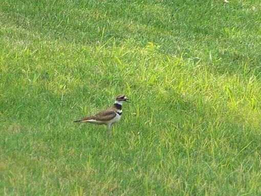 Post Your Bird Images Here!!!!!!!-birdk.jpg