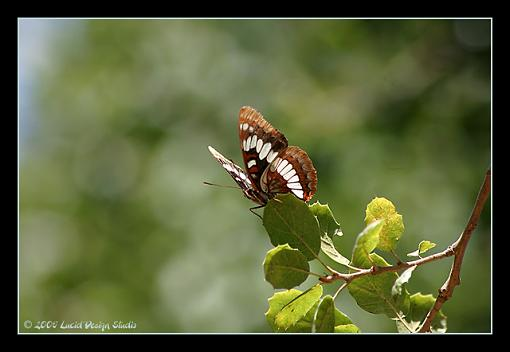 Post Your Bird Images Here!!!!!!!-butterfly2.jpg
