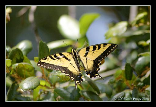 Post Your Bird Images Here!!!!!!!-butterfly1.jpg