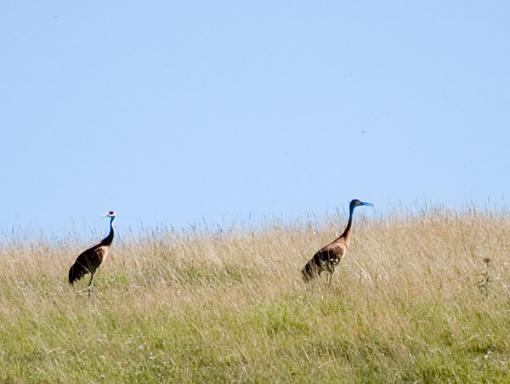 Post Your Bird Images Here!!!!!!!-crw_6813.jpg