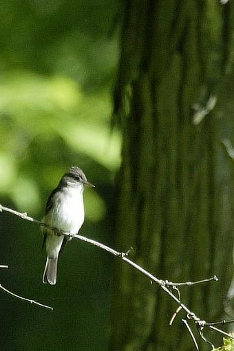 Post Your Bird Images Here!!!!!!!-c38d0488crop.jpg
