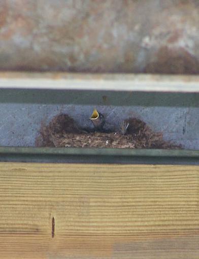 Post Your Bird Images Here!!!!!!!-babybird.jpg