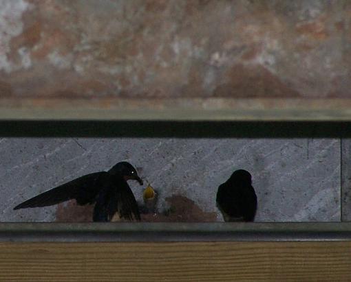 Post Your Bird Images Here!!!!!!!-mommabirdbaby.jpg