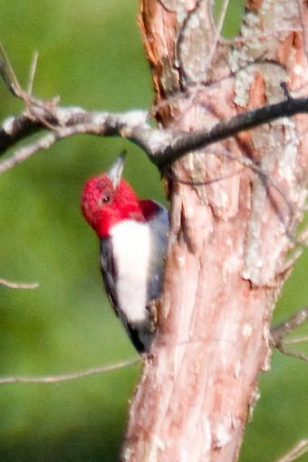 Post Your Bird Images Here!!!!!!!-crw_6909.jpg