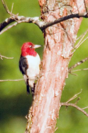 Post Your Bird Images Here!!!!!!!-crw_6911.jpg