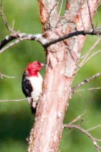 Post Your Bird Images Here!!!!!!!-crw_6913.jpg
