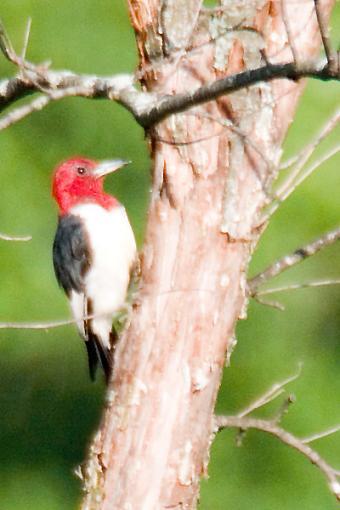 Post Your Bird Images Here!!!!!!!-crw_6914.jpg