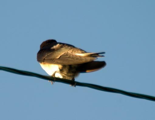 Post Your Bird Images Here!!!!!!!-crw_6918.jpg