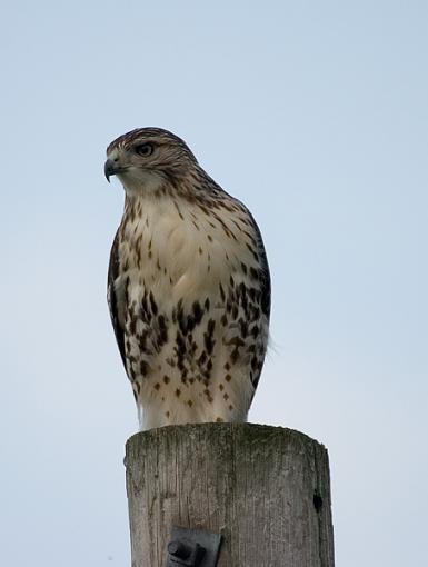 Post Your Bird Images Here!!!!!!!-crw_6926.jpg