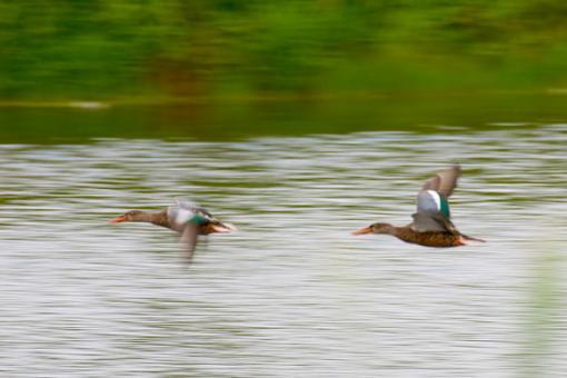 Post Your Bird Images Here!!!!!!!-crw_6979.jpg