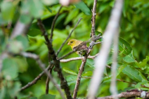 Post Your Bird Images Here!!!!!!!-crw_7010.jpg