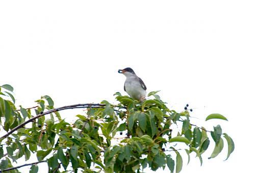 Post Your Bird Images Here!!!!!!!-crw_7001.jpg