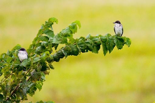 Post Your Bird Images Here!!!!!!!-crw_7025.jpg