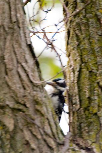 Post Your Bird Images Here!!!!!!!-crw_7015.jpg