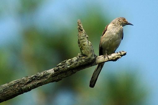 Post Your Bird Images Here!!!!!!!-mock.jpg