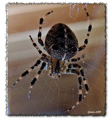 One for Almo-spider-web-copy.jpg