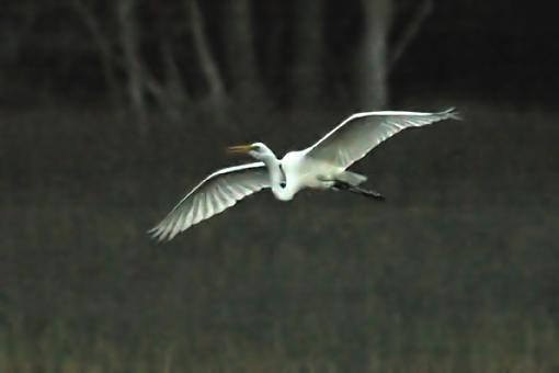 Post Your Bird Images Here!!!!!!!-eg.jpg