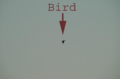 Post Your Bird Images Here!!!!!!!-bd.jpg