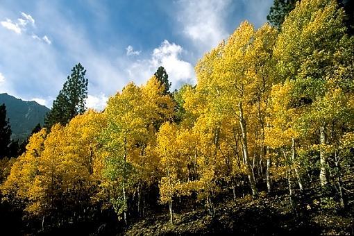Some Recent Fall Photos-f_0000262_web.jpg